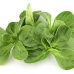 Der Feldsalat ist aufgrund seines hohen Vitamin- und Mineralstoffgehalts eine der nährstoffreichsten Salatsorten überhaupt.