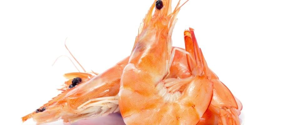 In der italienischen Küche sind Garnelen als Delikatessen sehr geschätzt.
