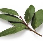 Der Lorbeer wird als Gewürzpflanze verwendet. Seine Blätter passen zu Suppen, Fleischgerichten, Eintöpfen, aber auch zu Fisch.