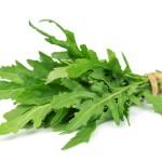 Rucola, auch Rukola und Rauke genannt, wird hauptsächlich als Salatpflanze angebaut