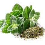 Oregano wird nicht nur als Heil-, sondern auch als Gewürzpflanze verwendet.